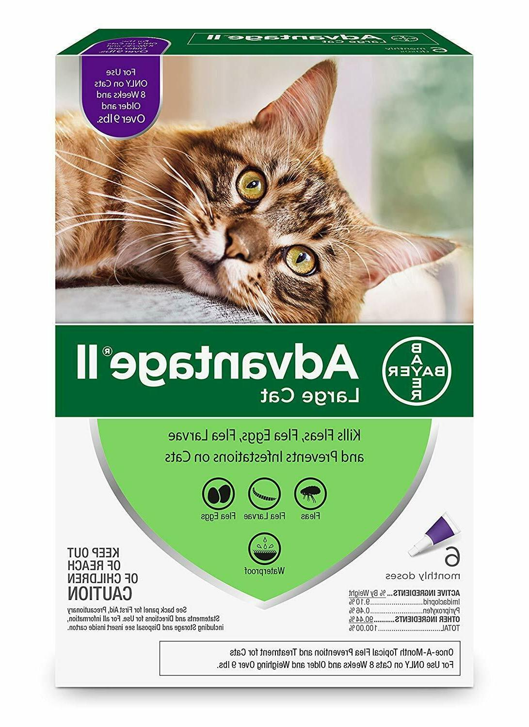 bayer ii flea prevention for large cats