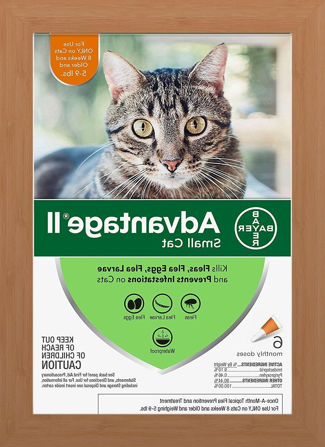 bayer ii flea treatment for small cats