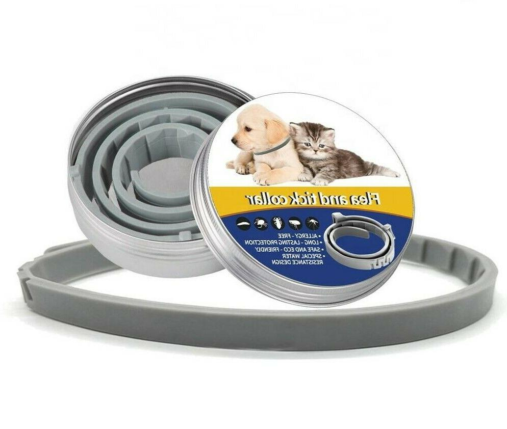 Flea and Collar for Dogs 3pk. All