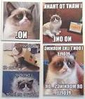Grumpy Cat Thank no one morning people believe fly idiot pet