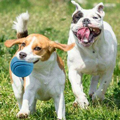 Solid Rubber Ball Fetch For Dogs